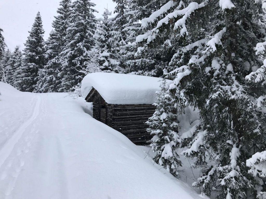 powder-snowalp