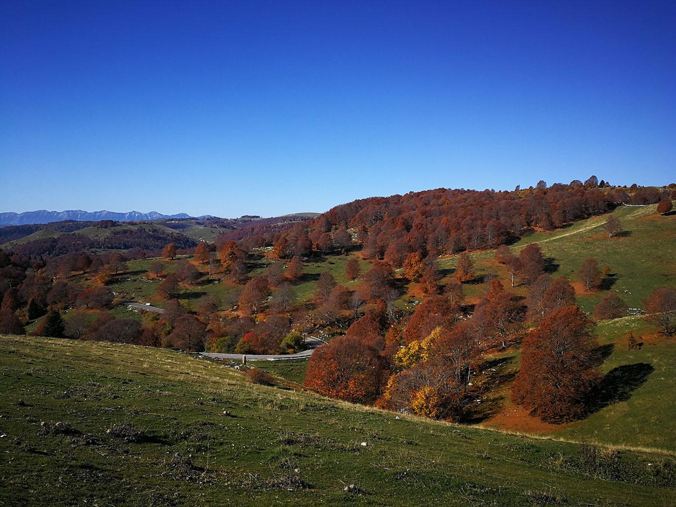 bioma foreste temperate