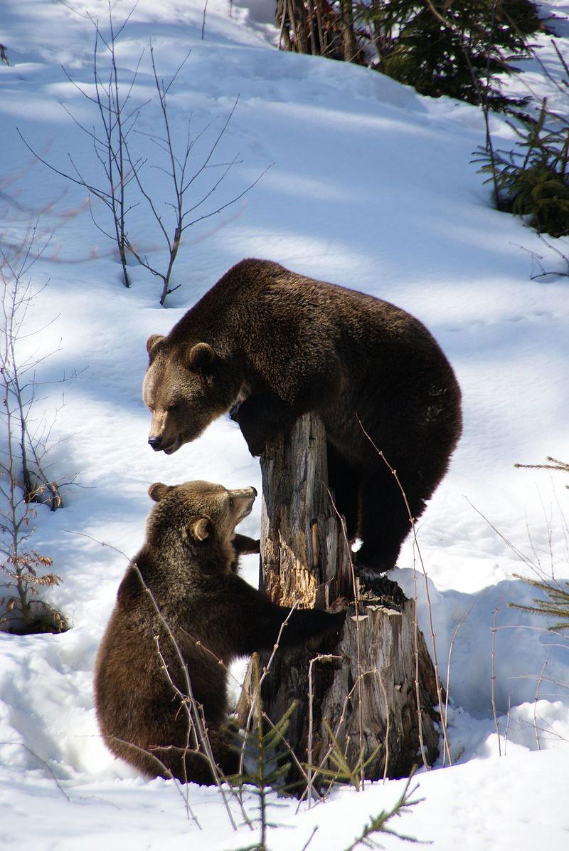 mamma-orsa-e-cucciolo