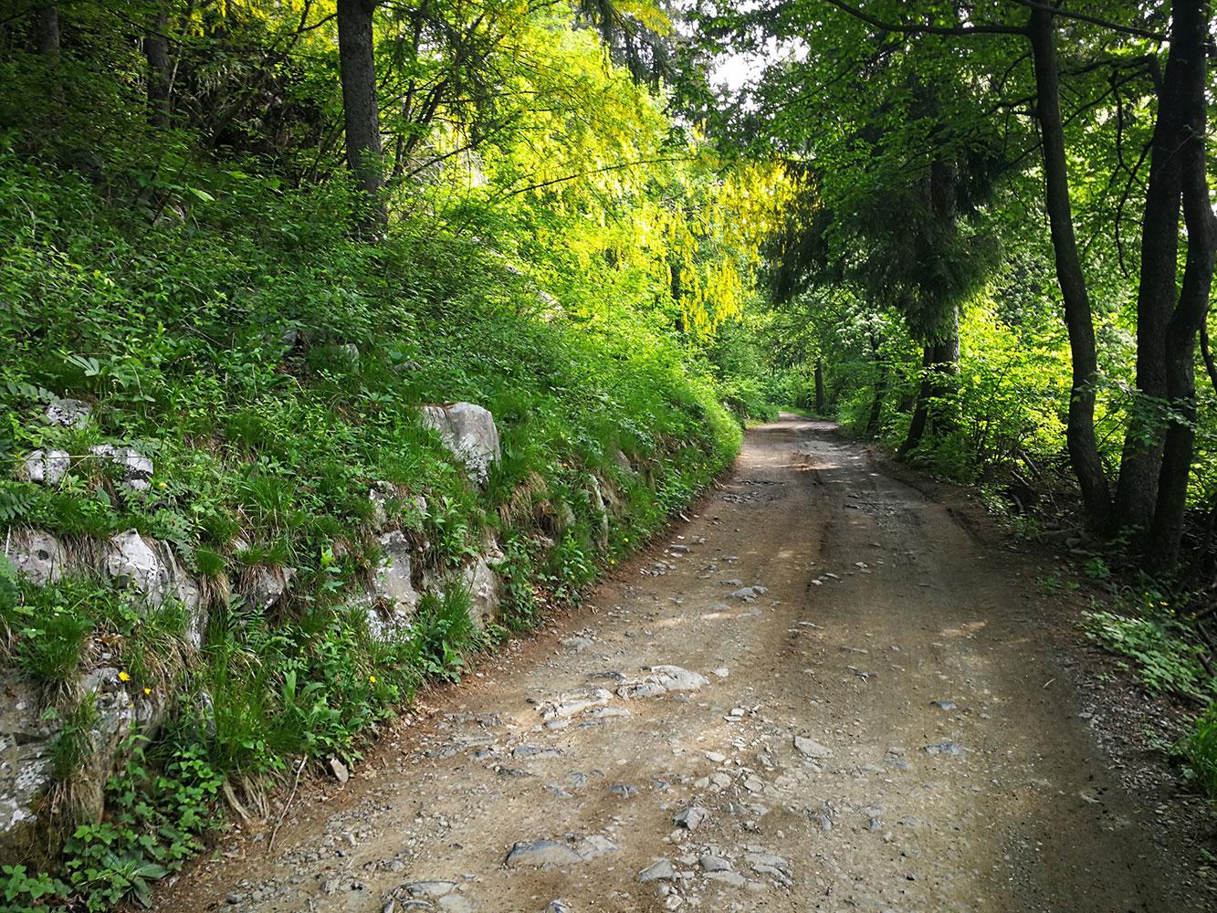 sentiero cai 547