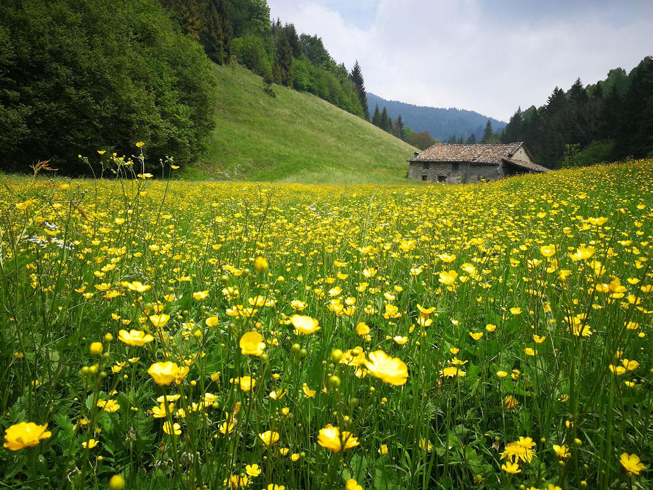 valpiana paesaggio fiorito