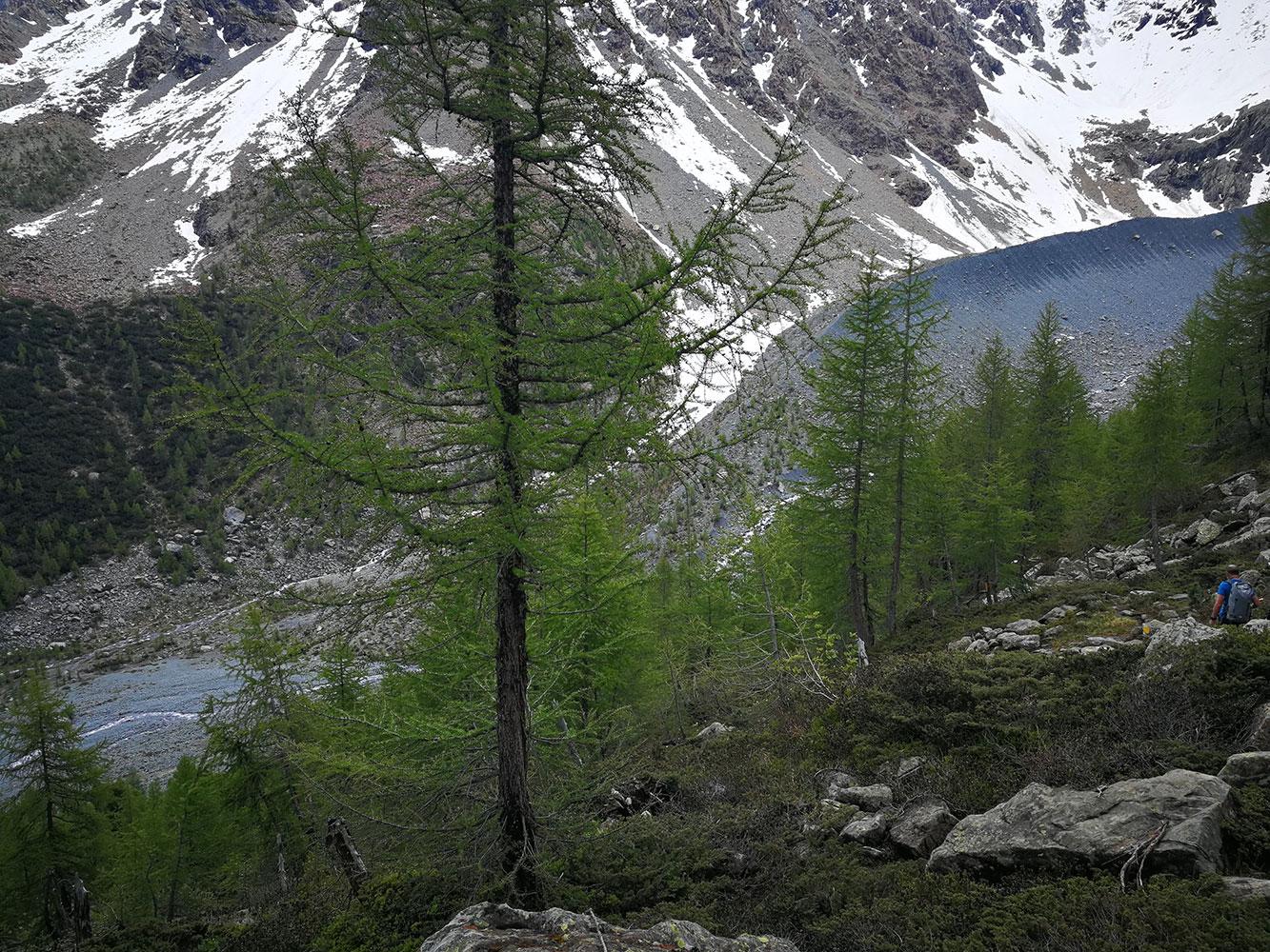 morena-glaciale-del-ventina