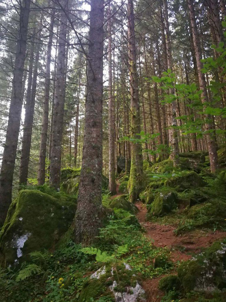 foresta-val-masino