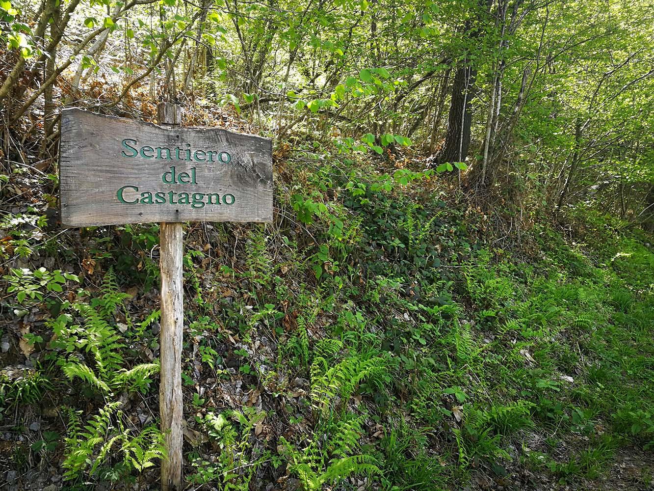 sentiero del castagno fiobbio